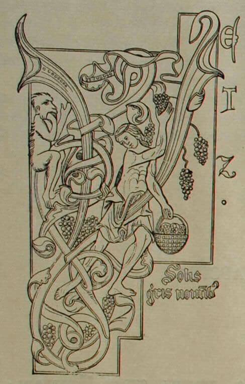 Сбор винограда. Миниатюра из рукописи. XIII в.